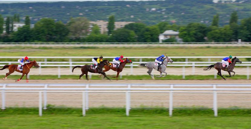 Longest Horse Race