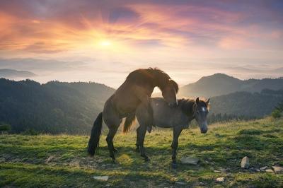 Horses Breeding