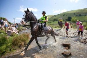 man versus horse marathon